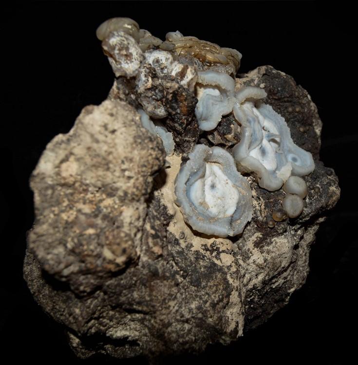 1004789722_Lussatite(3).thumb.jpg.a6286ddd32c9866587c612fd48d24547.jpg