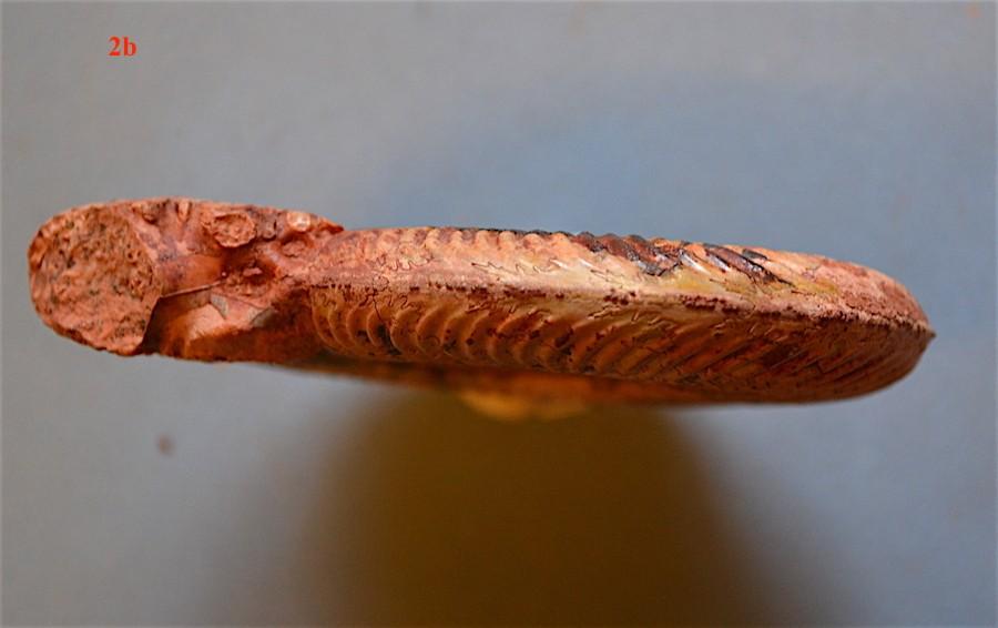 Pseudogrammoceras fallaciosum 2b.JPG
