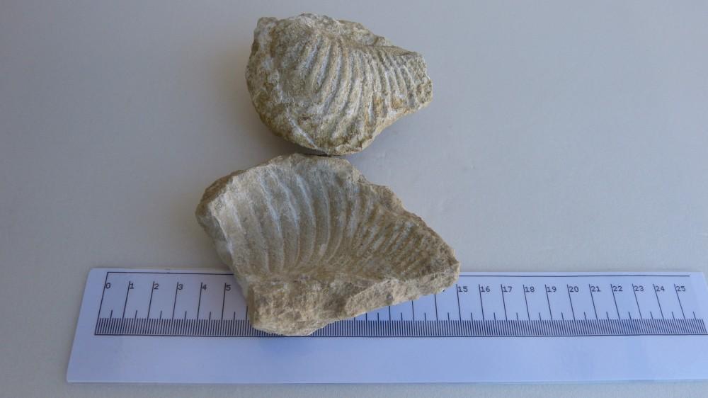 Fossile (3).JPG