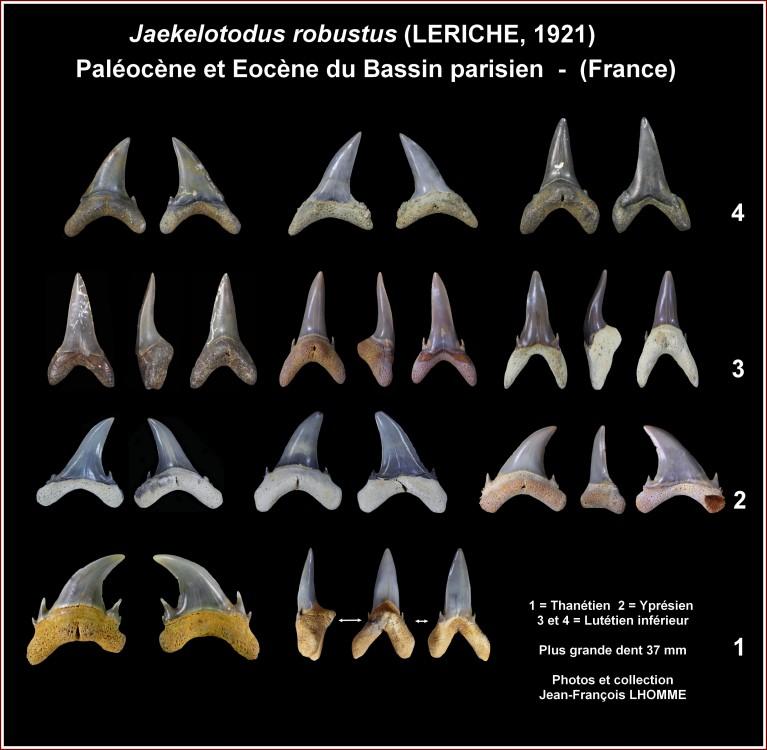 pl_robustus_paleocene.jpg