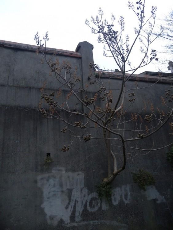 ob_932aff_arbre-mur-cimetierre.jpg