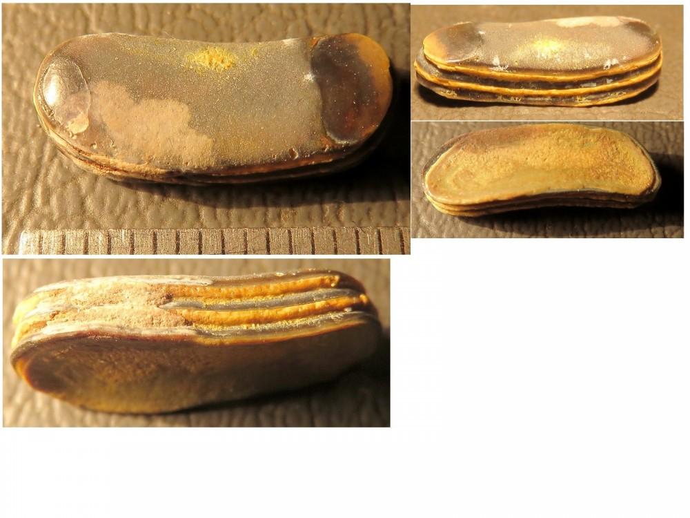 Phyllodus toliapicus.jpg