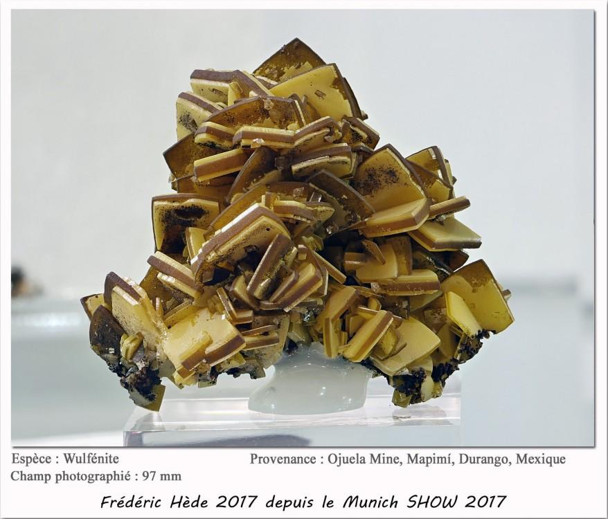 munich2017_017_391.jpg