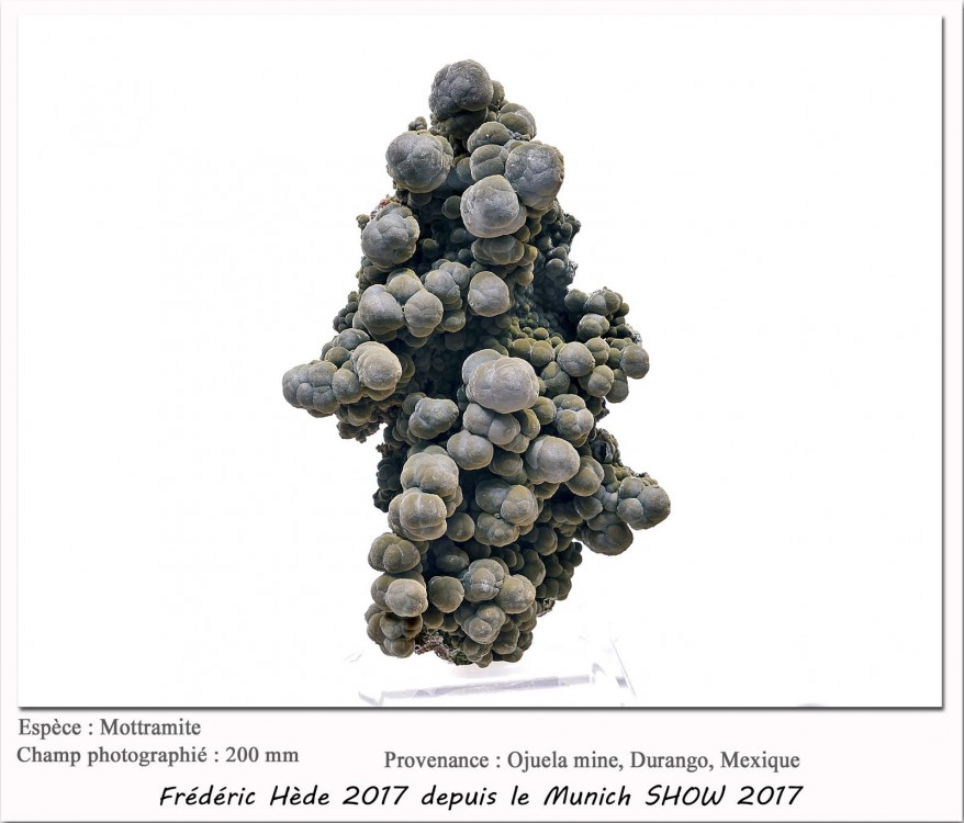 munich2017_067_138.jpg