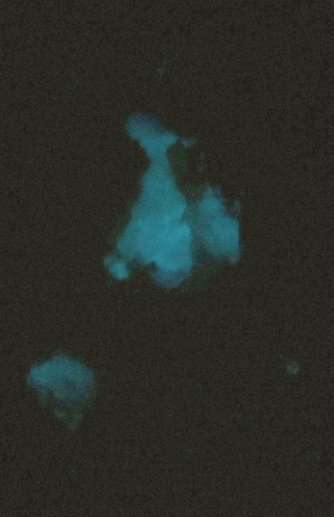 C-minéraux FLUORINE phosphorescente.JPG