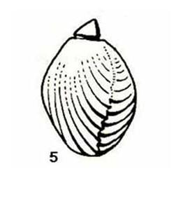 figure-2-rhynchonelle-arcy.jpg