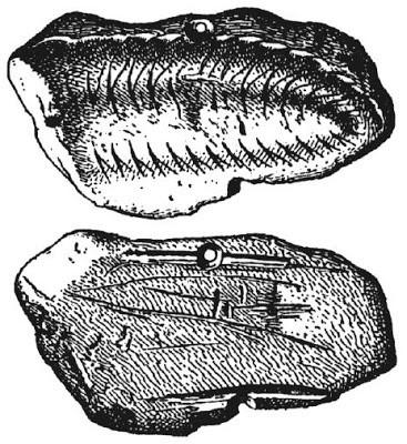 figure-3-Yonne-Trilobite-1.jpg