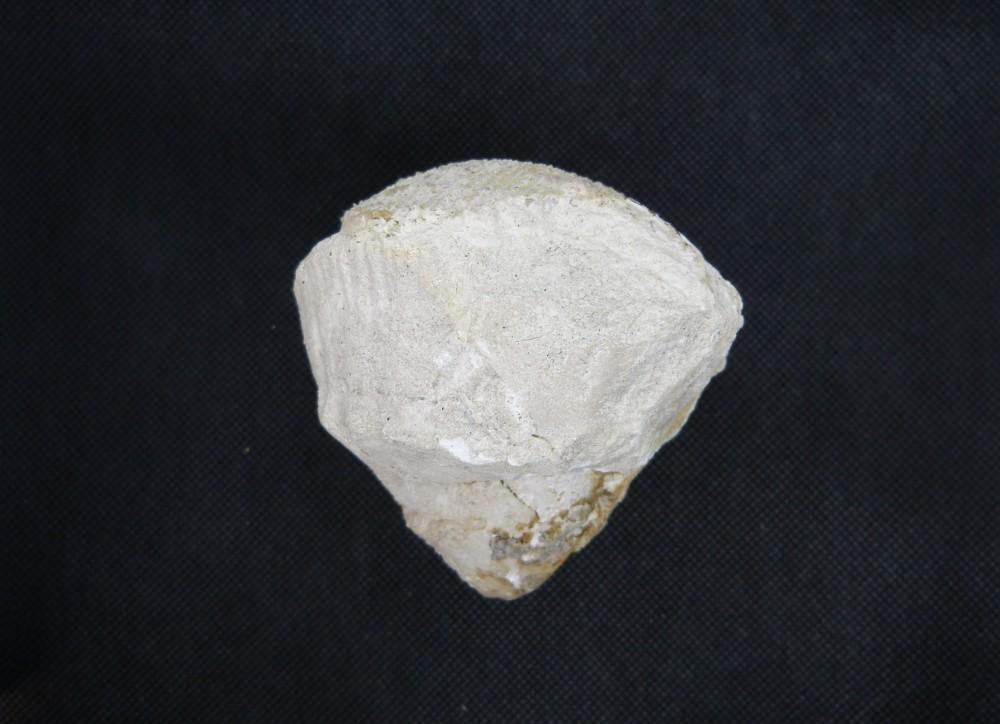5 - Fossile - Avant.JPG