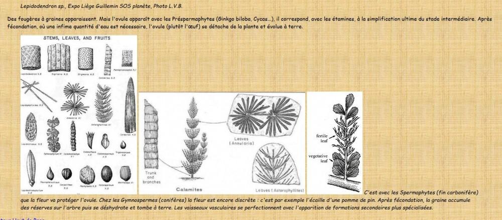 430793518_zgrainesfossiles(2).thumb.jpg.e2410ae12d2be306406d08dfefad92fb.jpg