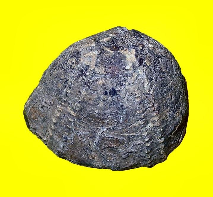 Oursin (5,3 x 4,7 cm)_Senonien_St André de l'Eure_2.jpg