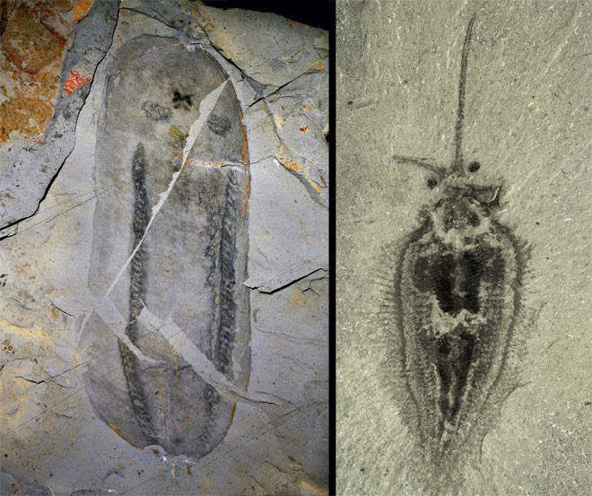 science_shale_fossils_15.jpg