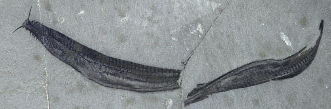 science_shale_fossils_24.jpg