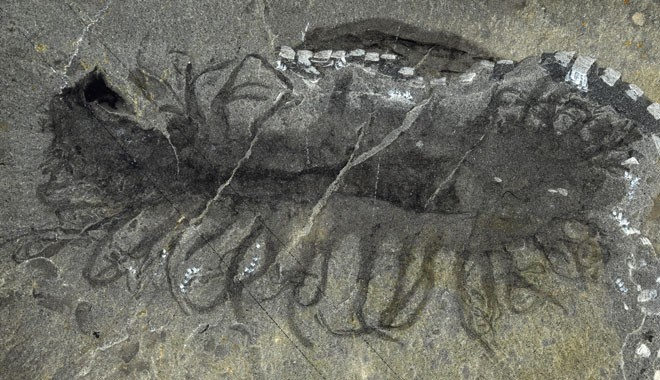 science_shale_fossils_33.jpg