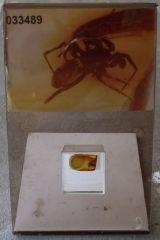 Inclusion d'insecte dans de l'Ambre