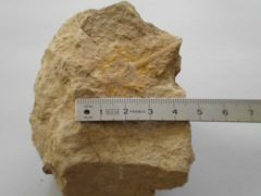 Fossile indéterminé Callovien PONCIEUX 01