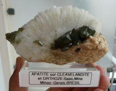 Apatites sur Cleavlandite et Orthose, Mines Sapo, Minas gerais, Brésil.